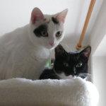 Lynn und Mimi, neu Milene und Toulouse