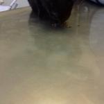 Velvette beim Tierarzt