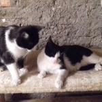 Mickey und Barny