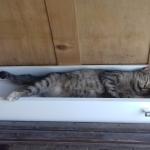 Alissa schläft in einer Schublade