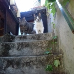 """Hornbach und Lucky Treppe maison """"Flocon"""""""