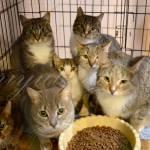 Katzen Russland1