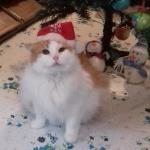 Liowa Weihnachten