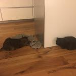 Aida neues Zuhause2