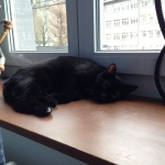 Balu in seinem neuen Zuhause