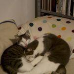 Carlo und Pipsie in ihrem neuen Zuhause