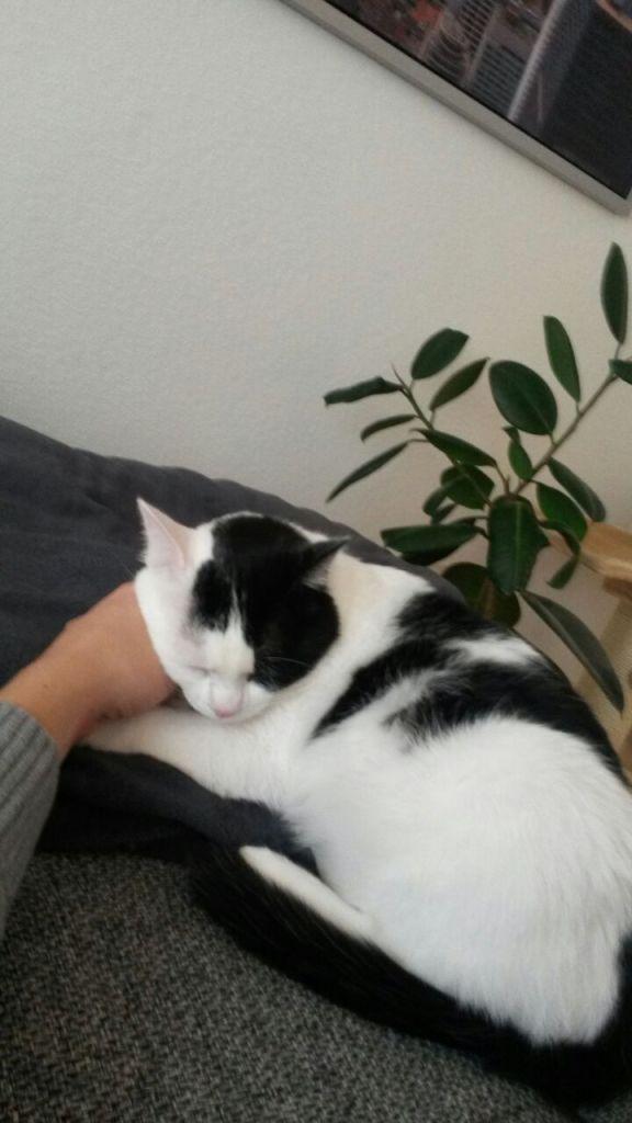 Theo in seinem neuen Zuhause