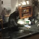 Velvette erkundet die Küche