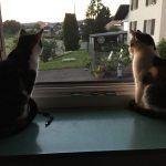 Paloma mit ihrem neuen Brüderchen Leo :-)