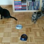 Tschipie und Bellbell in ihrem neuen Zuhause
