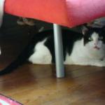 Danny unter dem Sofa