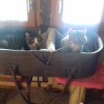 Hornbach und Lucky freuen sich, wenn's zu Hause wärmer wird