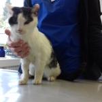 Mussja beim Tierarzt