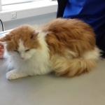 Liowa beim Tierarzt
