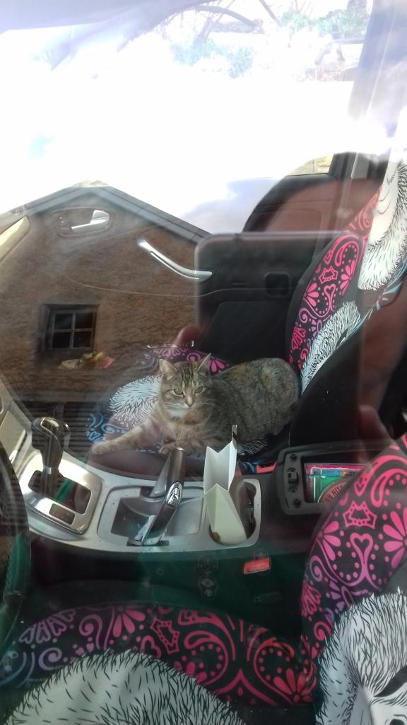 Josi auf dem Beifahrersitz