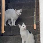 Annabelle (oben) und Belinda (unten)